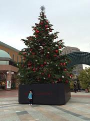 恵比寿ガーデンプレイスのクリスマスツリー2014