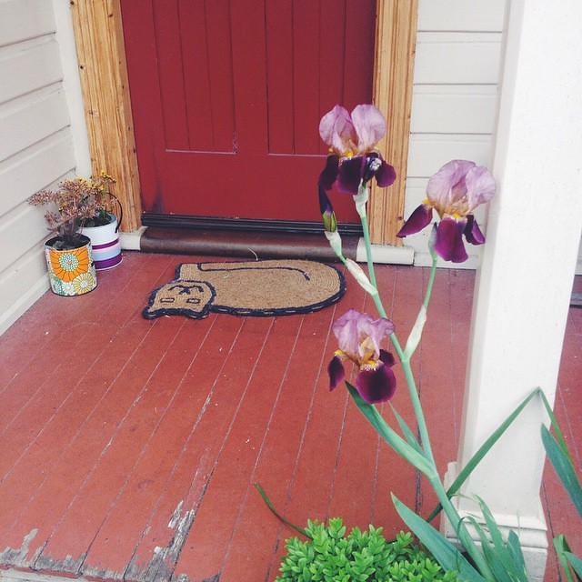Some lovely irises that sprung up at my front door overnight. Also, if anyone lives in Launceston and would like a dozen white calla lilies - they are taking over my backyard, and despite being very beautiful, they're toxic to cats, so if like to get rid