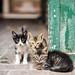 Cat friendship