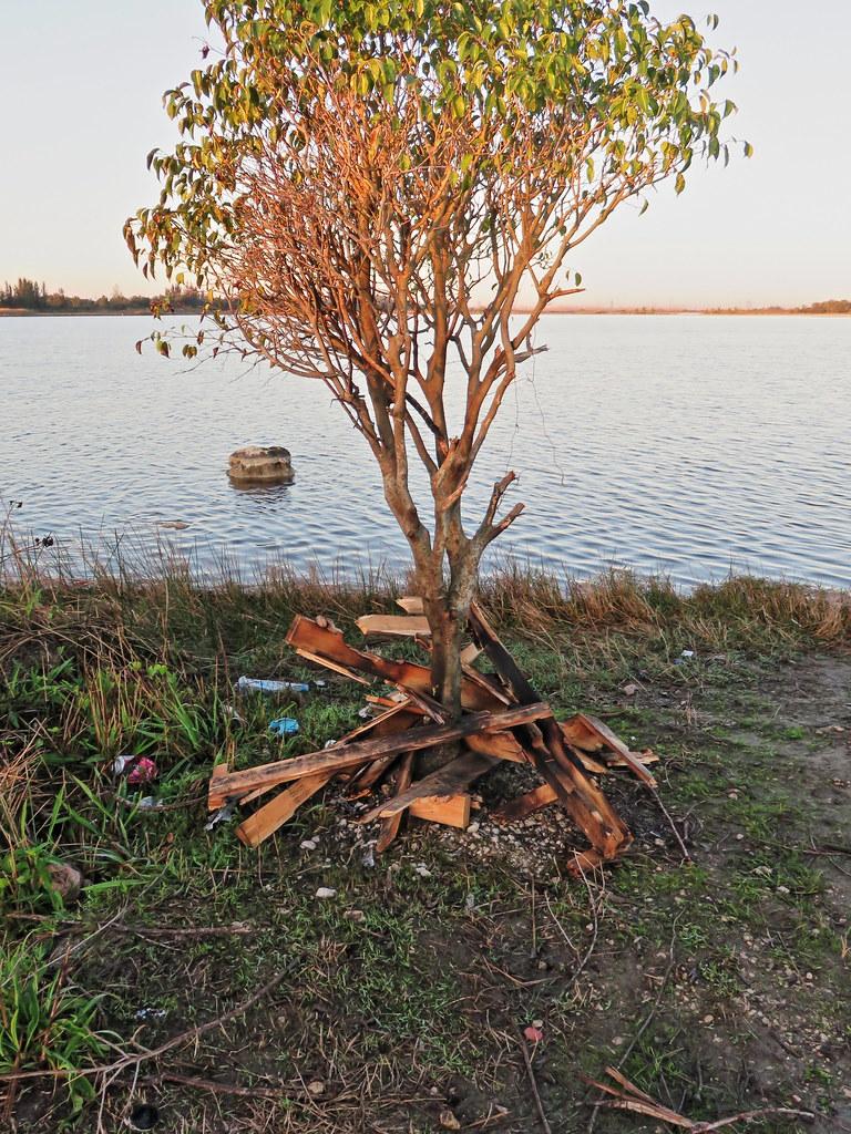Bonfire under tree 20150117