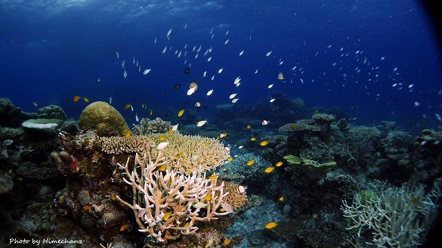サンゴに熱帯魚に癒されますなぁ♪