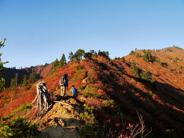f14769f581 登山道も一気に明るくなる。痩せ尾根とは言っても危険箇所はないので、かなり快適に歩けますよ。