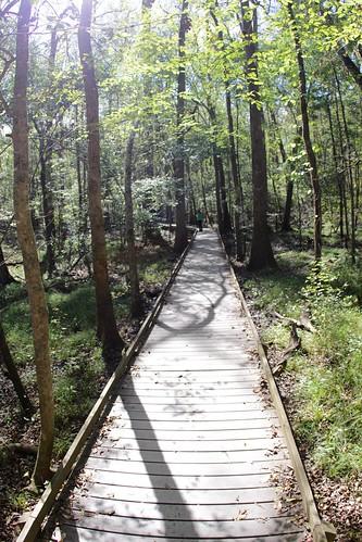 trees nps trail swamp boardwalk marlena congaree baldcypress deaftalent deafoutsidetalent deafoutdoortalent