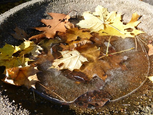 Frozen birdbath with fallen leaves