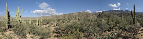 saguaronationalpark rinconmountains saguaronationalparkeast garwoodtrail saguaronationalparkrinconmountaindistrict garwoodtrail20141116 saguaronationalparkrinconmountaineastdistrict