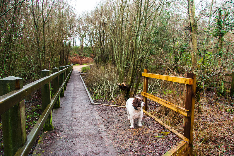 Max on the boardwalk by the lake where the willows have been coppiced