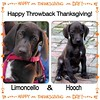 Today we are thankful for these two 4-legged liver babies who bring so much joy to us each and every day. Enjoy your Holiday, everyone!