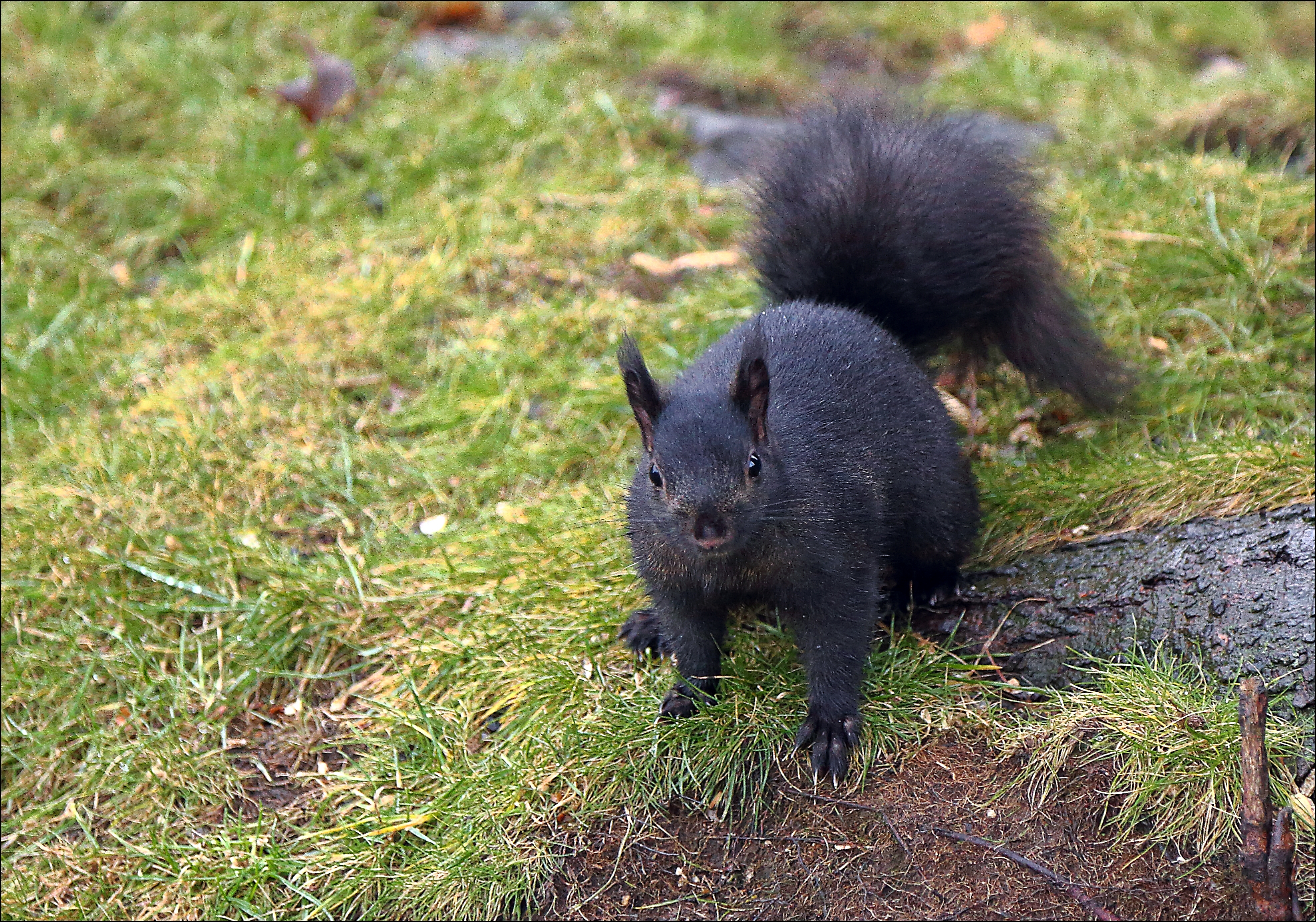 50 Degrees and Expecting Thunderstorms...Wind Warning. canon, blacksquirrel, 6d. buy photo
