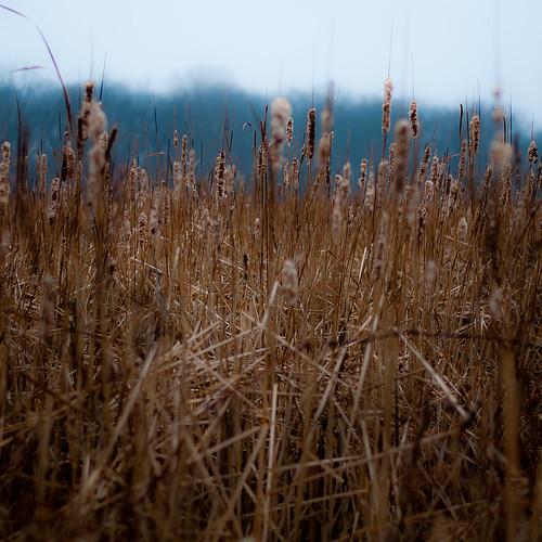 autumn mist blur misty fog forest square landscape woods nikon dof foggy cattails wetlands prairie marshland d5000 noahbw