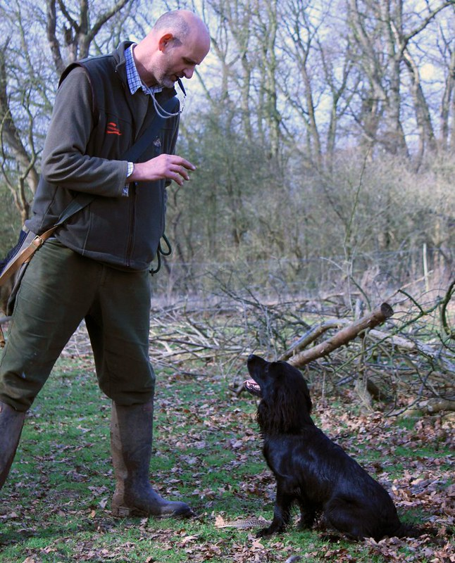 Gundog Training - Surrey & Cambridgeshire