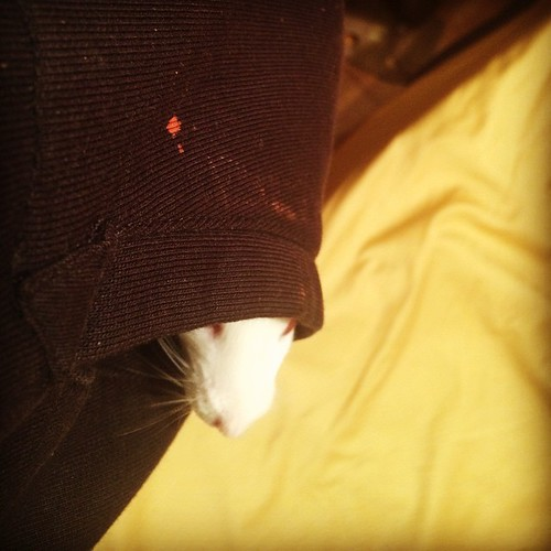 Mitchell hitches a ride in my hoodie pocket