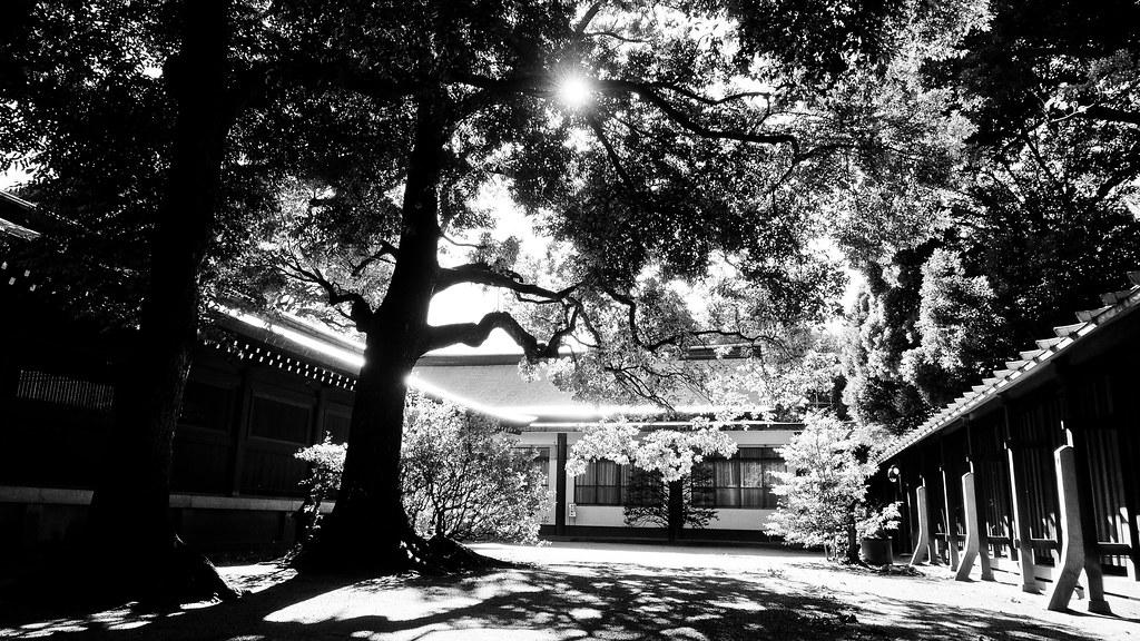 明治神宫 Meiji Jingu
