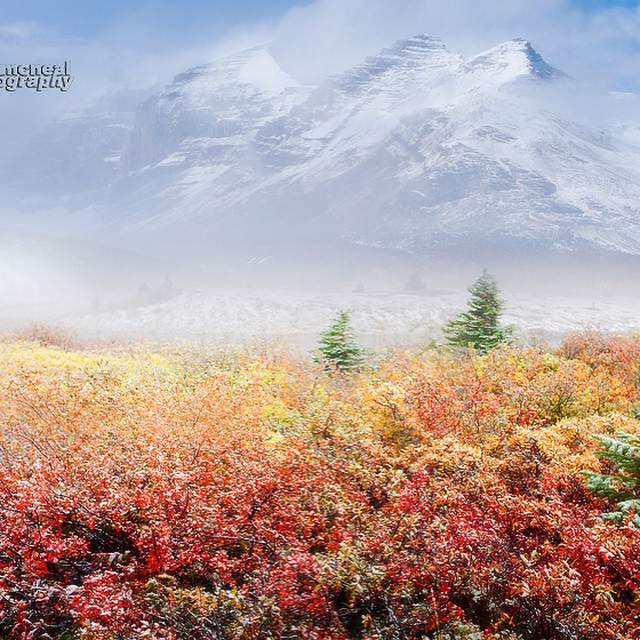 Kevin McNeal - Canadian Rockies in late Autumn and the the first snowfall of the year !!  #Canadianrockies #autumn #fallcolors #canada