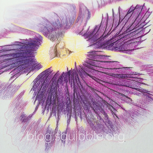 squibble_design_pansy_painting_week3_2
