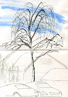 1-19-15 willow tree from Whole Foods parking lot, Seattle