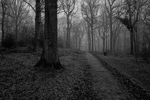 wood trees winter people mist mono woods fujifilm wgc xpro1 sherrards 18mmf2 gor44