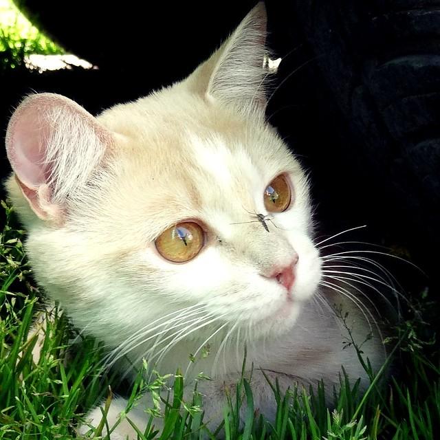 A cat #cats #animals #funny #summer #nature #cat #кошки
