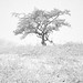 Tree in snow by Willem Eelsing