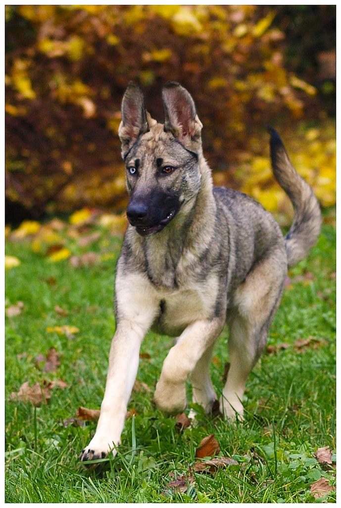 Photographie d'animaux - conseils pour devenir un pro ! - Page 3 15253096694_c0d3cb9261_b