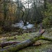 A river ready for winter by trevorhicks