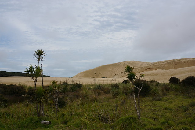 Large sand dunes south of Cape Reinga
