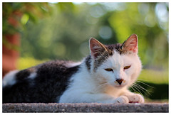 Chat - Photo of Wintersbourg