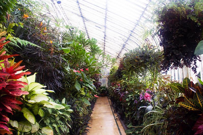 Botanic Gardens - Belfast