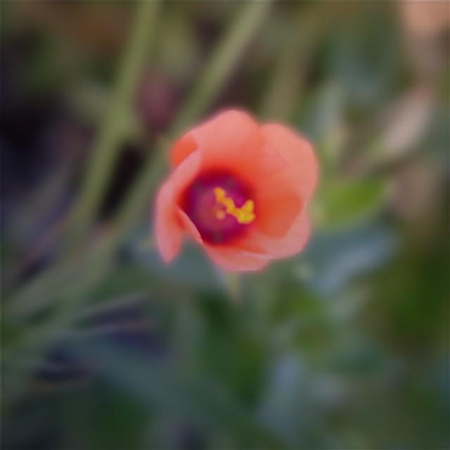 Flower Blur FX