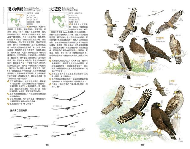 鳥友初見野鳥時,往往不知從何入門辨識,本書則描繪所有鳥類的辨識重點,只需依照書中箭頭或文字補充,就可以快速掌握辨識重點。圖檔─東方蜂鷹、大冠鷲。(圖片來源:林務局提供)