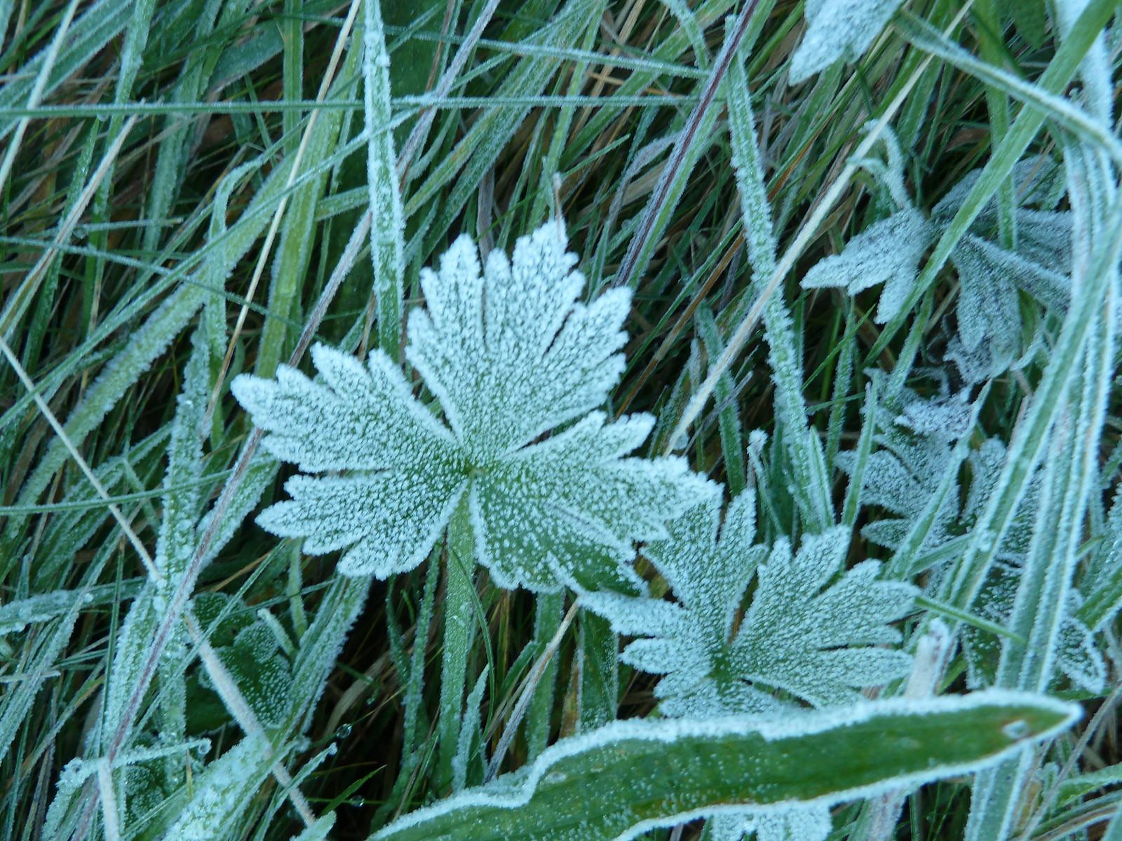 Frost 1 (Berwick to Birling Gap)