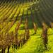 Denbie's Wine Estate