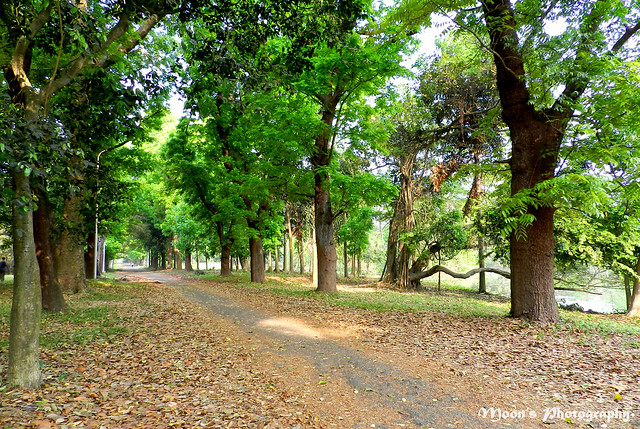 country road, #naturetrail - Shibpur Botanical Garden