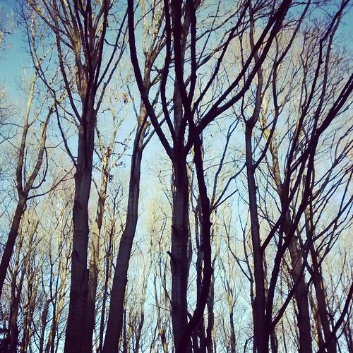 Allestree Woods
