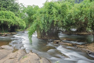 Bamboo islands