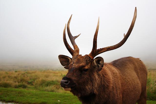 Sambhur - Horton Plains National Park
