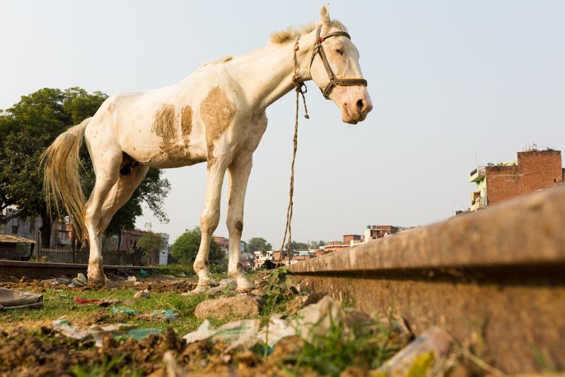 Horse on tracks, Allahabad