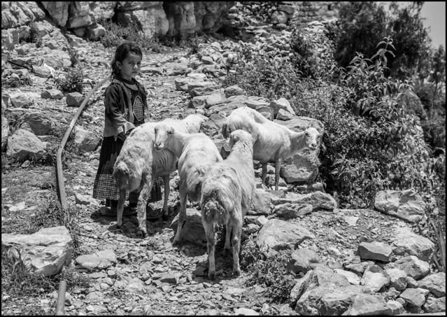 EE3V8514 Bambina con pecore (EOS 1Ds 24-70mm USM)