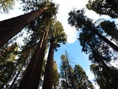 I Speak for the Trees poetry stories