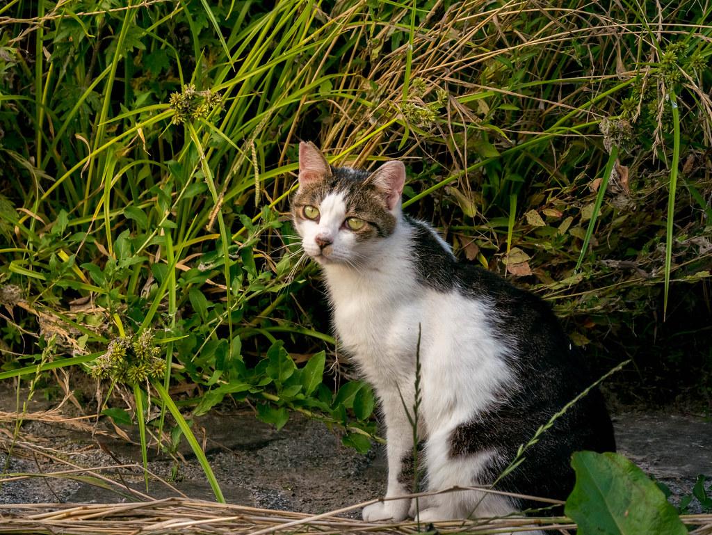 眼が綺麗な猫