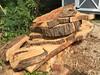 200 Year Old Honey Locust round/cookie cross cuts
