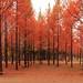 Fall in the fall!!!! by ak_phuong (Tran Minh Phuong)