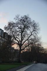 Wintery Tree, Kensington Gore, South Kensington