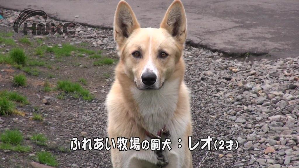 北海道單車行第二天.mp4_20141224_013929.984