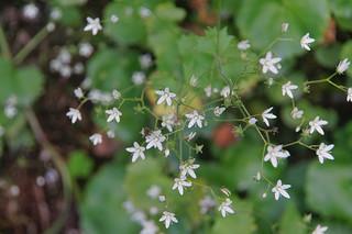 066 Witte bloemen