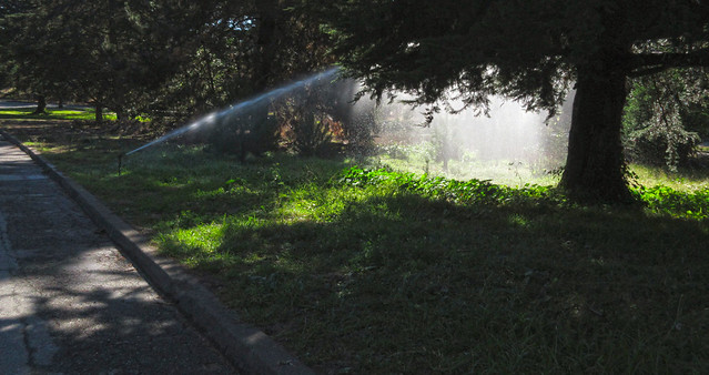 sprinkler in sunlight at Golden Gate Park, San Francisco (2014)