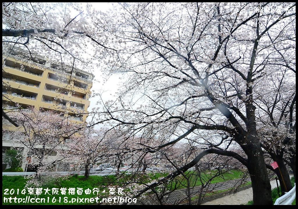 2014京都大阪賞櫻自由行.奈良DSC_0817