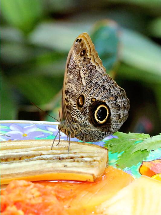 091014_01_butterfly09