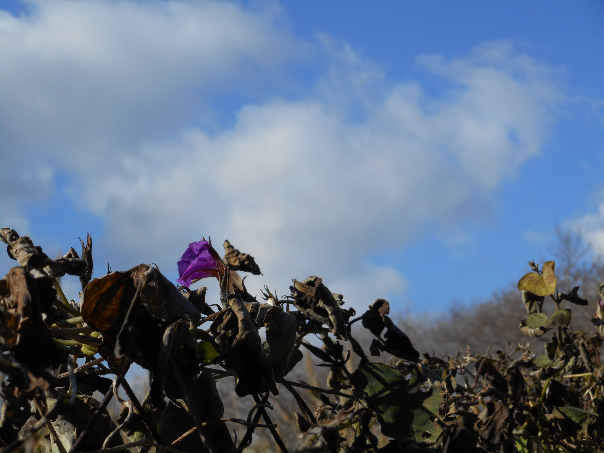 Μια ζεστή μέρα μετά από το κύμα ψύχους των προηγούμενων ημερών στη Ψίνθο