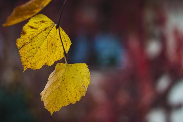 [234] Leaves