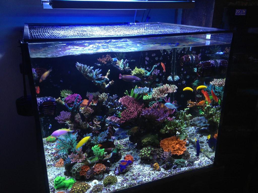Podpimp 39 s 115 gallon custom cube 32x32x26 members for Aquarium cuve